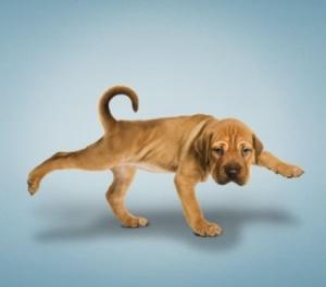 funny-yoga-dog-091